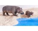 Betzold Afrikanische Tiere 18-tlg-2