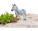 Betzold Afrikanische Tiere 10-tlg Set-3