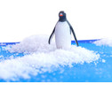 Betzold Arktische Tiere 6-tlg-3