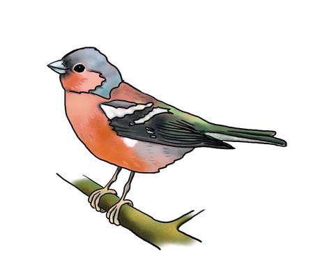 Vocabular Wortschatzbilder Tiere Pflanzen Natur-4