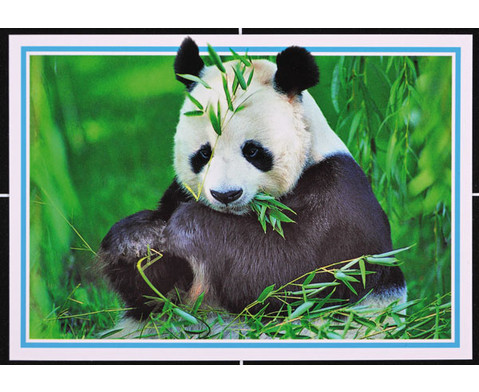 Was ist Was Tierpostkarten 16-tlg-3