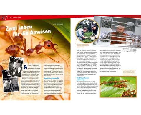 Was ist Was - Ameisen und Termiten-2