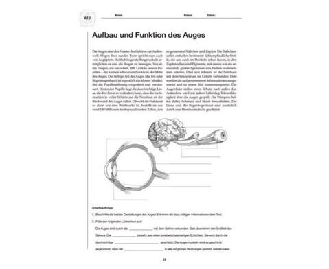 Kopiervorlagen Sinnesorgane und ihre Funktionen-2