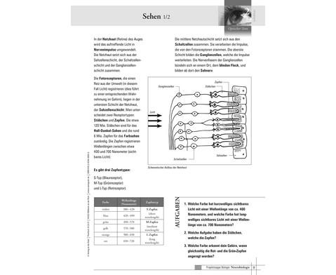 Projektmappe Neurobiologie-4
