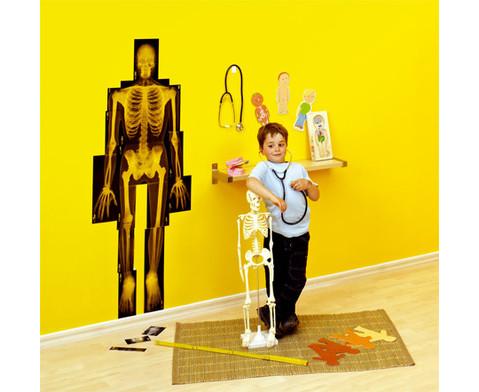 Menschlicher Koerper Lern-Set-2