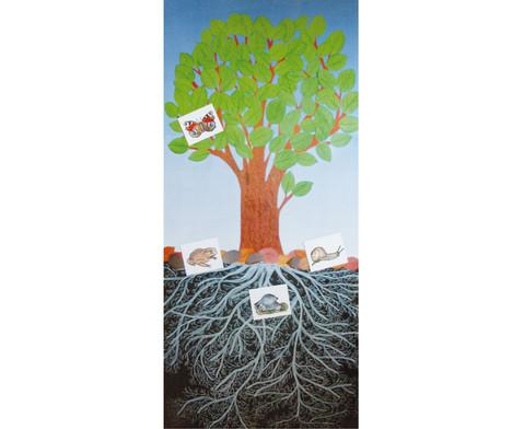 Der Baum - Ein Lebensraum-1