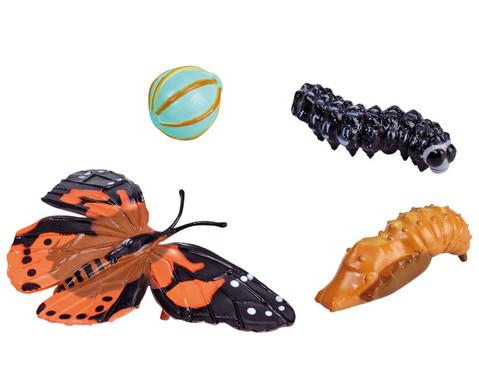 Lebenszyklus-Figuren Schmetterling-1