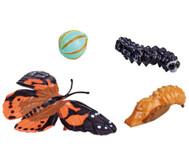 Lebenszyklus-Figuren: Schmetterling