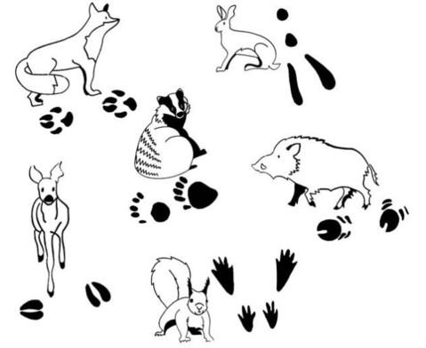 Tierspurenstempel 12tlg-5