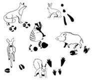 Tierspurenstempel, 12tlg