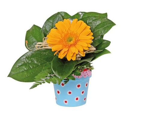 Blumentoepfchen 10er-Set  blanko-4