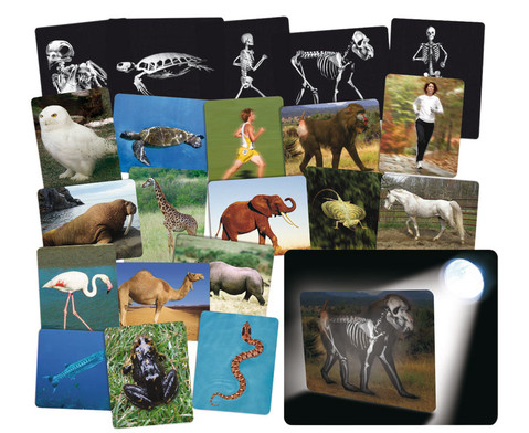 Roentgenbilder Tier und Mensch-1