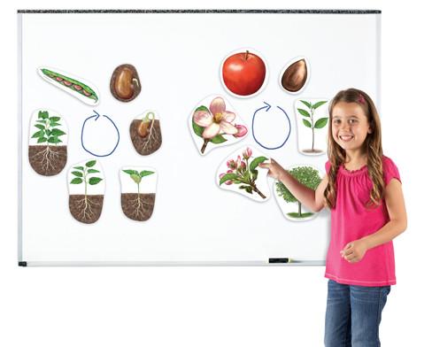 Grosse magnetische Pflanzenzyklen-3