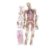 Kernspin-Bilder 'Menschlicher Körper'