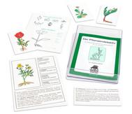 Der Pflanzendetektiv