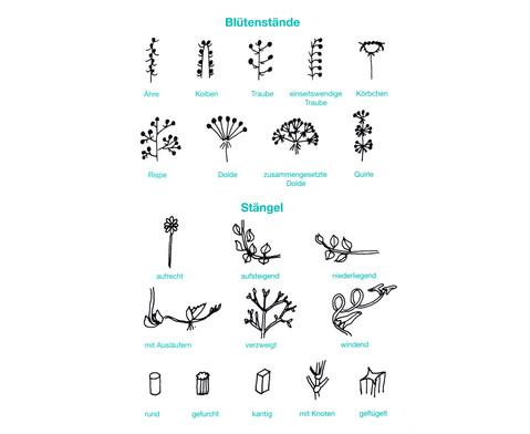 Der Pflanzendetektiv-7