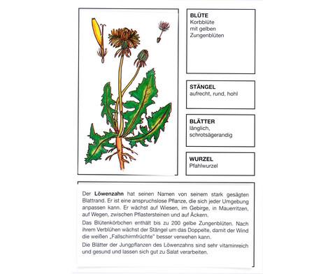 Der Pflanzendetektiv-8