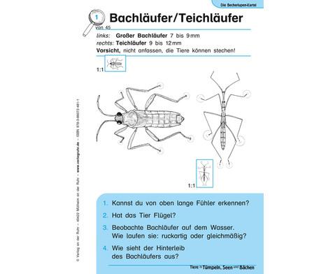 Becherlupen-Kartei Tiere in Tuempeln Seen und Baechen-2