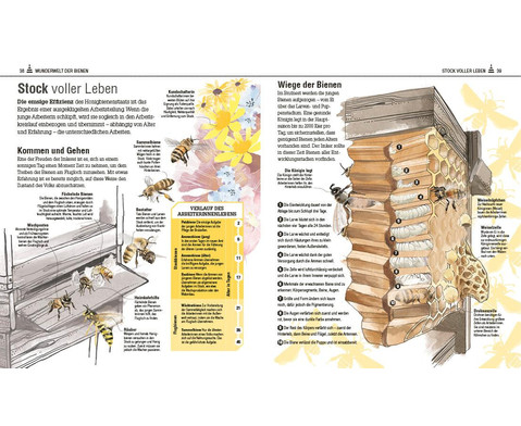 Das Bienen Buch-7