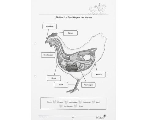 Lernwerkstatt Das Huhn-3