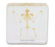 Fledermausskelett