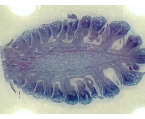 Easi-Scope Digital-Mikroskop-4