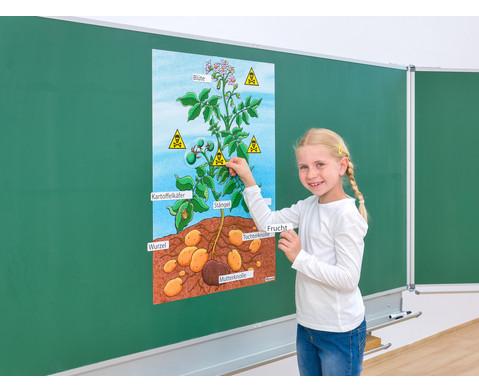 Die Kartoffelpflanze-3