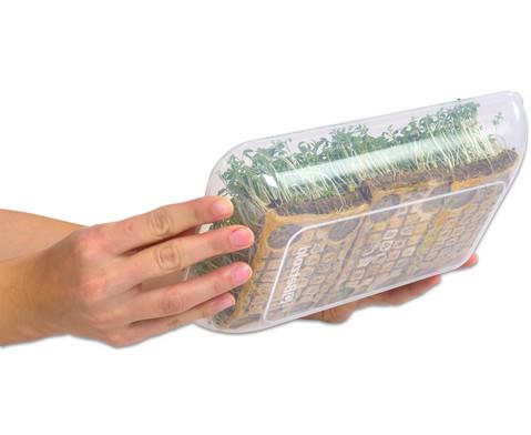 Transparent-klare Materialschalen gross 5 Stueck-3