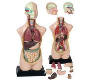 Körper & Gesundheit