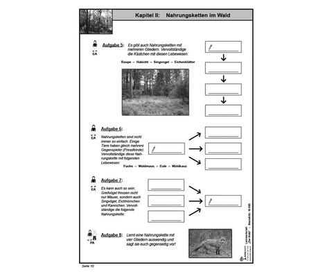 Lernwerkstatt Der Wald-5