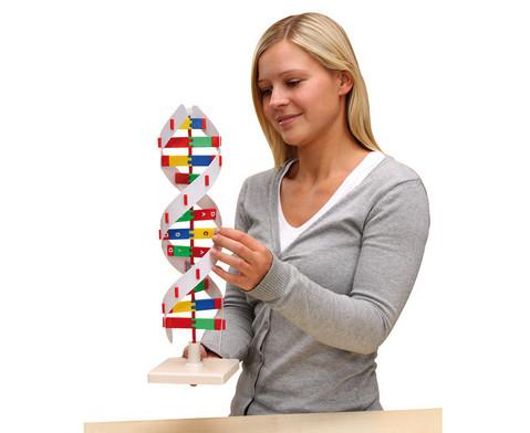 Schematisches DNS Modell-1
