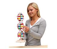 Schematisches DNS Modell