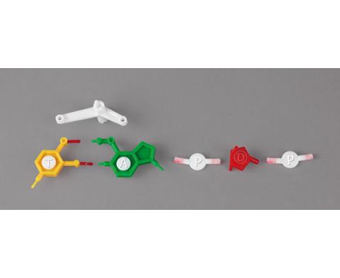 DNS Modell gross-5