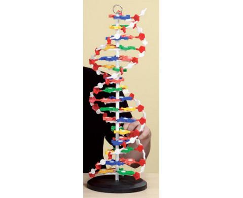 DNS Modell gross-7