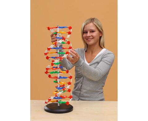 DNS Modell gross-1