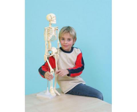 Kleines Skelett-2