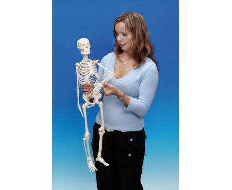 Kleines Skelett-3