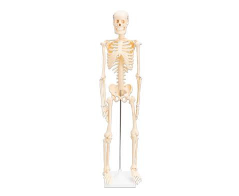Kleines Skelett-1