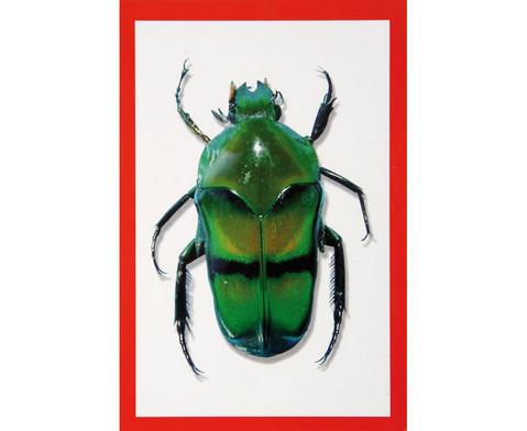 Insekten-Roentgenbilder-2