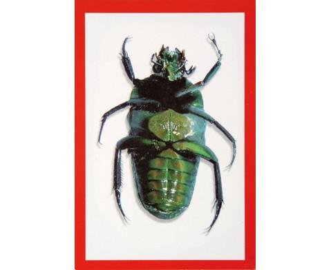 Insekten-Roentgenbilder-3
