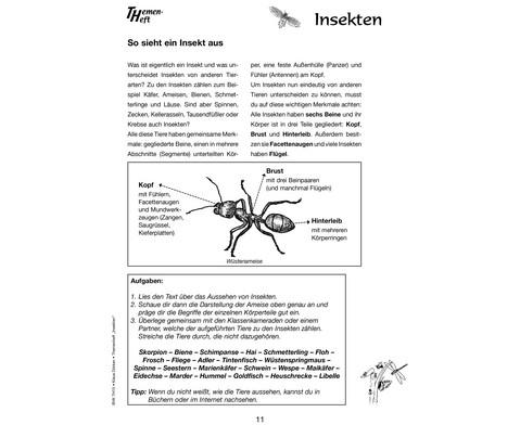 Themenheft Insekten-3