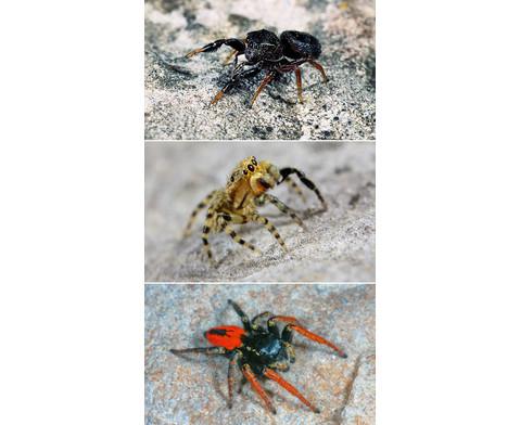 Welche Spinne ist das-3