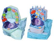 Modell-Set: tierische und pflanzliche Zelle