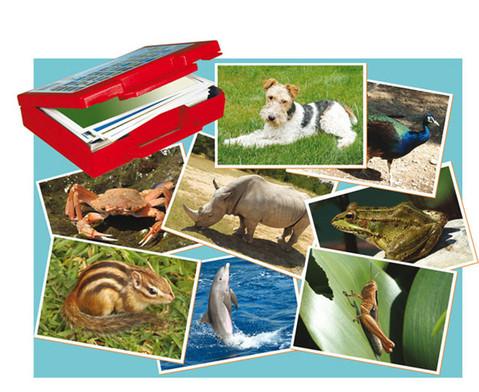 Fotokarten Tiere-1