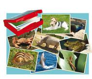 Fotokarten Tiere