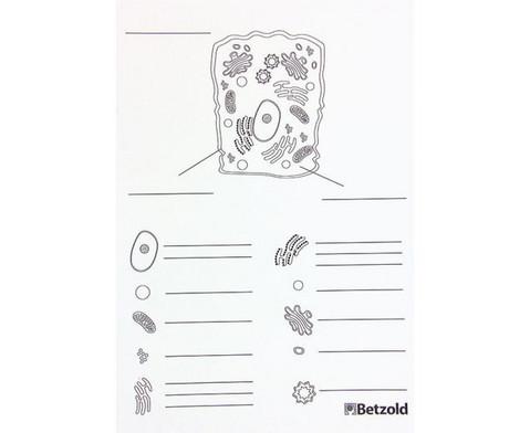 Magnetische Tierzelle-17