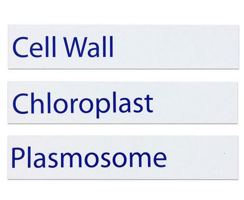 Magnetische pflanzliche Zelle-14