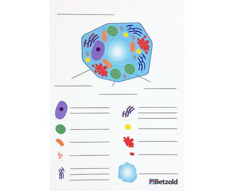 Magnetische pflanzliche Zelle-18