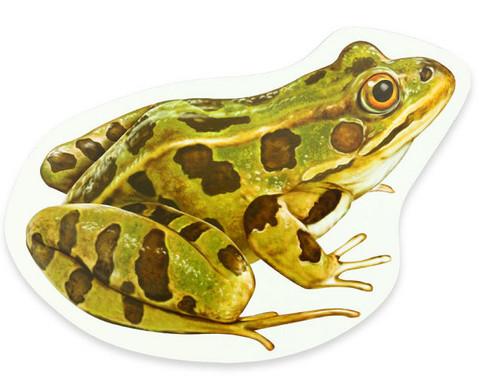 Lebenszyklus Frosch magnetisch-2