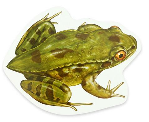 Lebenszyklus Frosch magnetisch-3